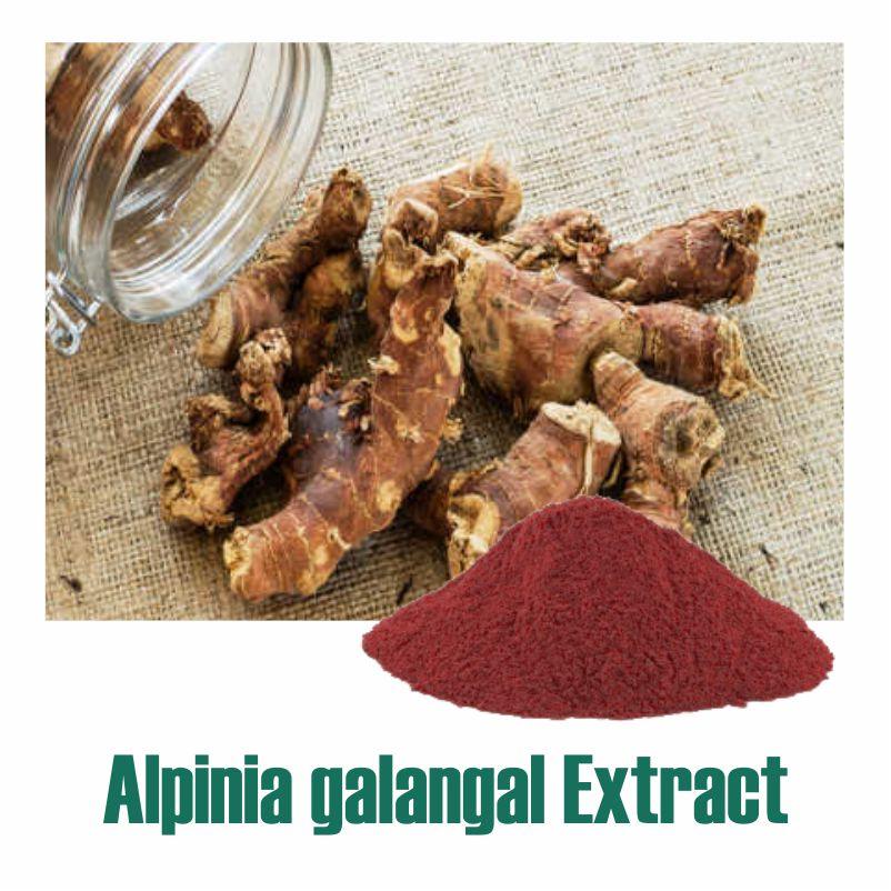 Alpinia galangal Extract