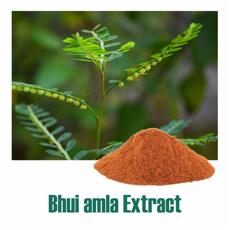 Bhui amla Extract