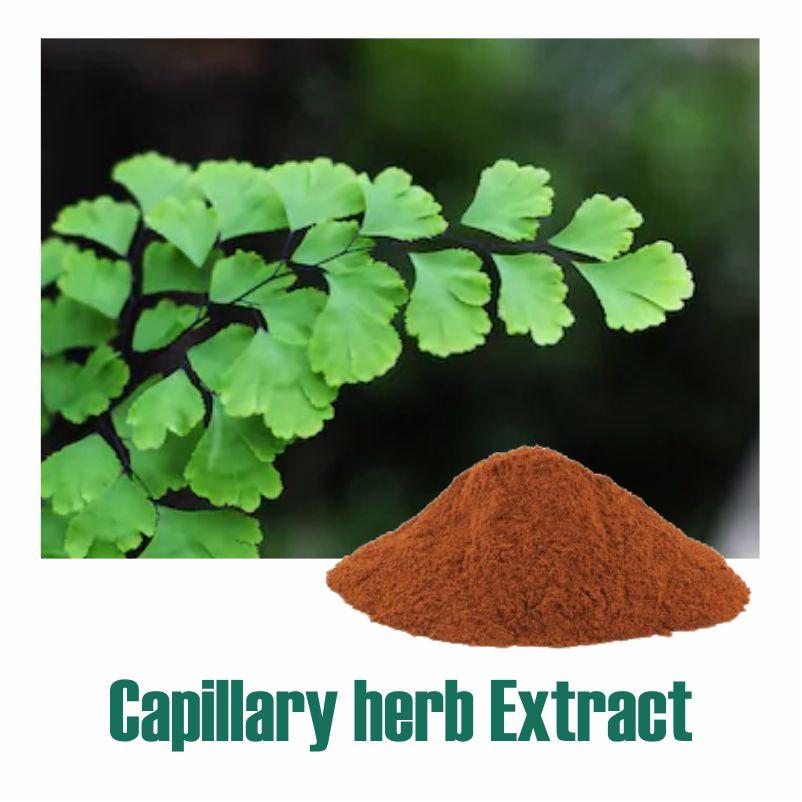 Capillary herb Extract