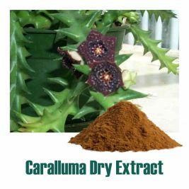 Caralluma Dry Extract