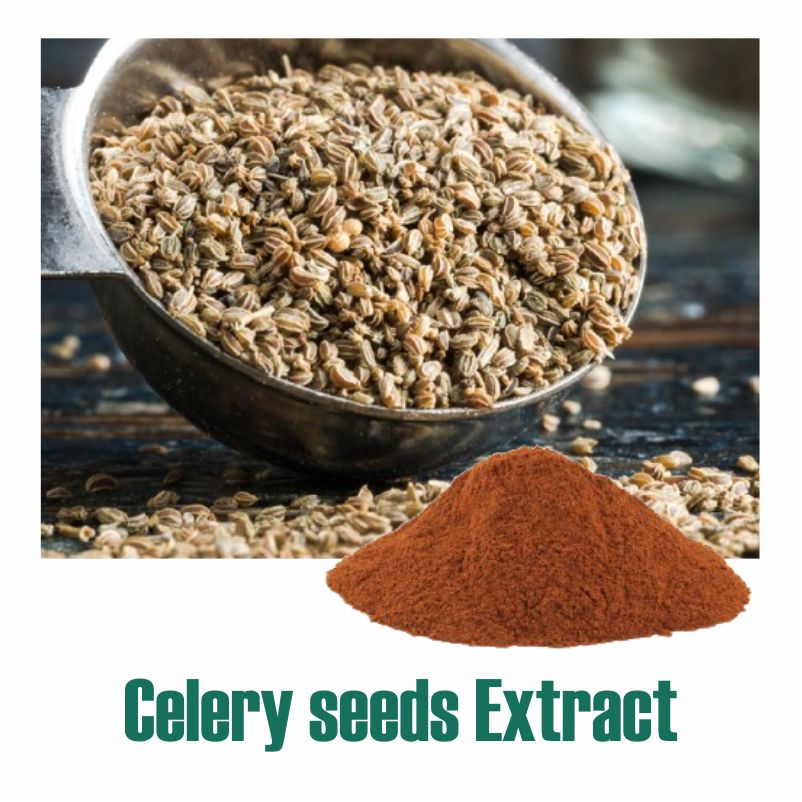 Celery seeds Extract