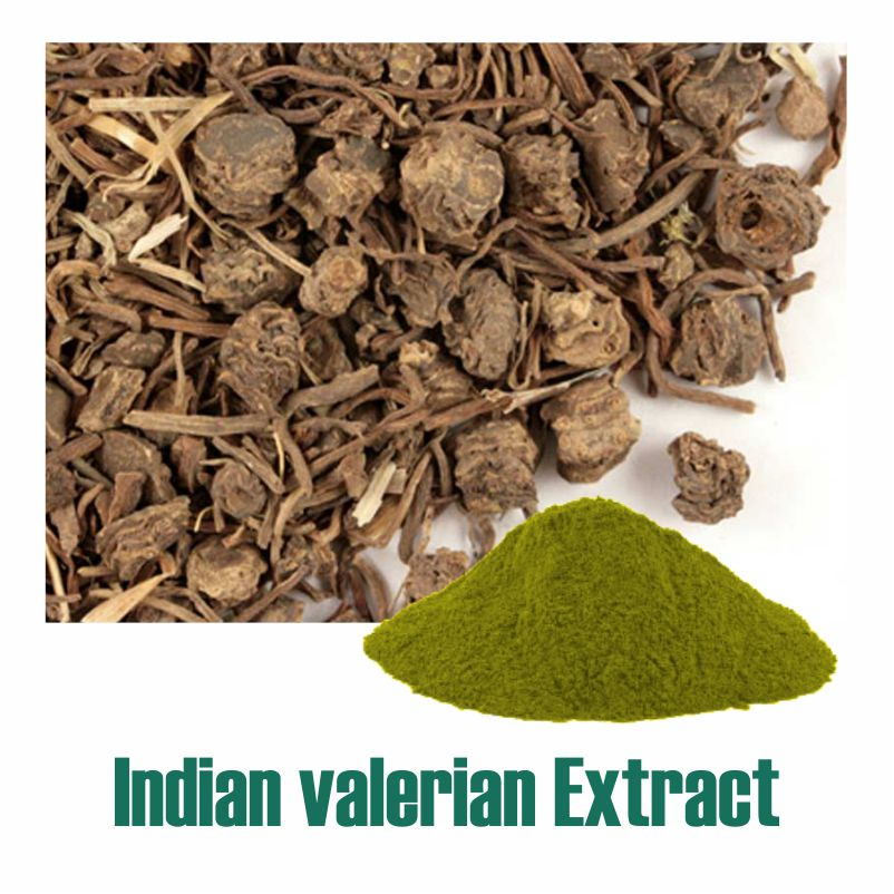 Indian valerian Extract