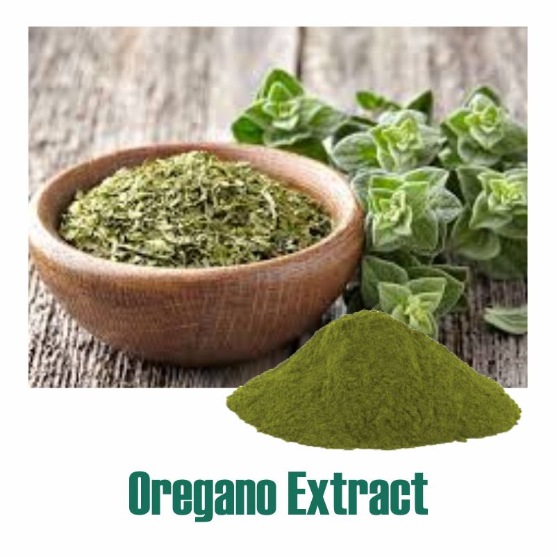 Oregano Extract