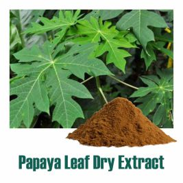Papaya Leaf Dry Extract