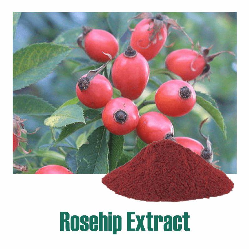 Rosehip Extract