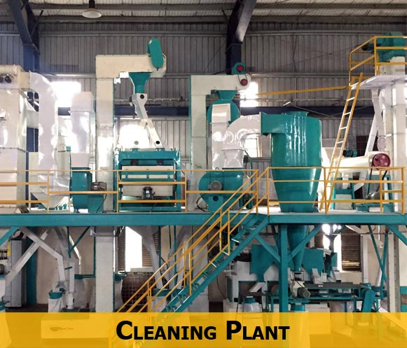 Cleaning Plant