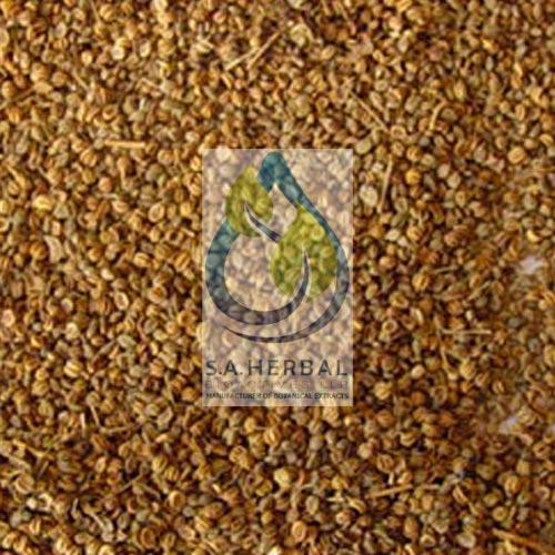 apium-graveolens-seed-extract